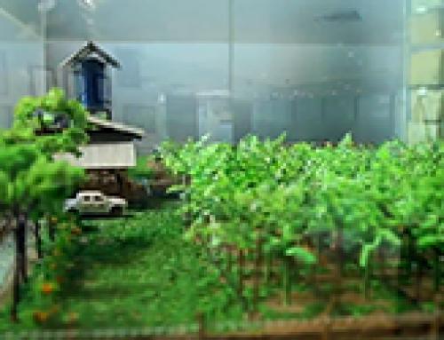 Asia Plantation Capital   Plantation Visit – 016 [May 2015]