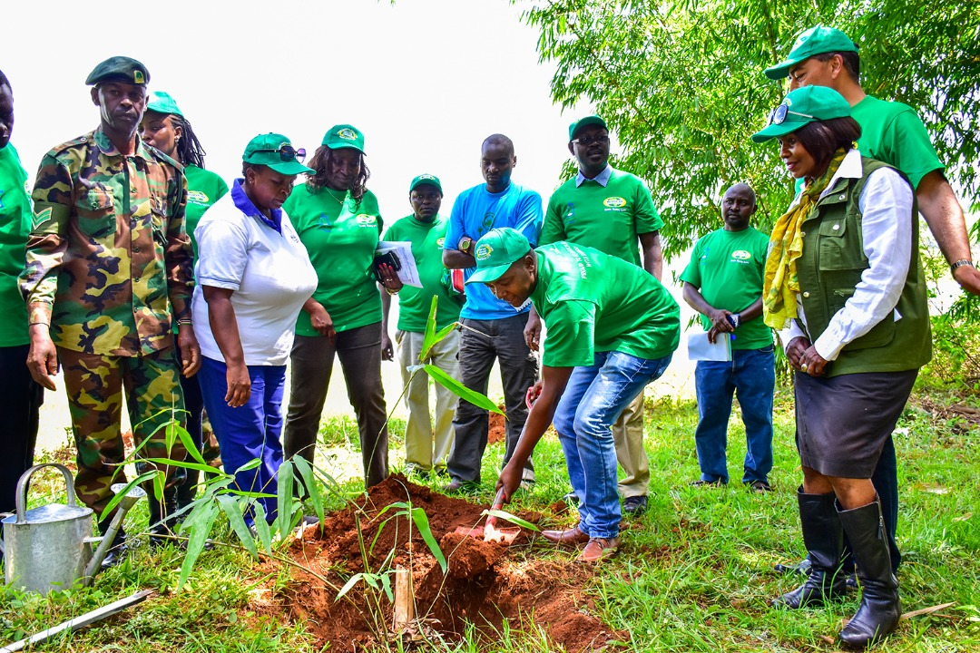 APC & BIDCO  HOST AFRICA BAMBOO PLANTING DAY